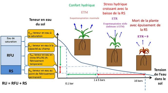 Relations entre la teneur en eau du sol, la tension de l'eau dans le sol et le statut hydrique d'une culture (cas d'un sol peu épais homogène avec un enracinement homogène où on aurait une tension identique en tous points)