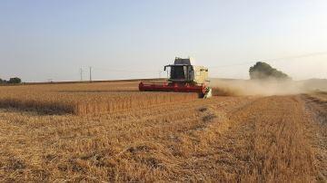 Un «bon cru» pour le blé, des inquiétudes pour le maïs