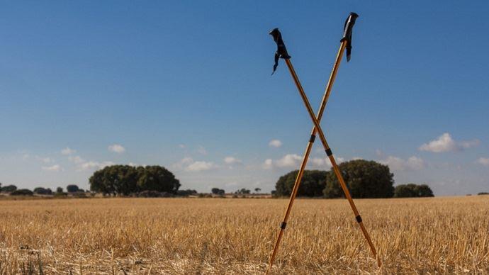 Bâtons de marche dans un champ