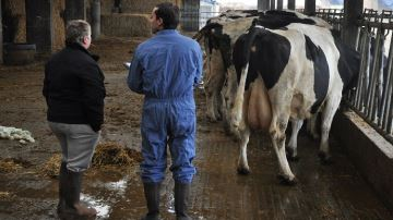 Dans l'Aude, le départ d'une vétérinaire synonyme de «catastrophe»
