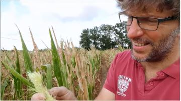 En manque de stock, Agriskippy s'apprête à ensiler une partie de son maïs