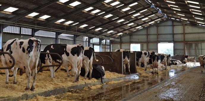 La SCEA du Champ Fleury c'est: 160 VL et 3 robots de traite pour produire 1,65 million de litres de lait, 3 associés et 2 salariés, 300ha et un méthaniseur.