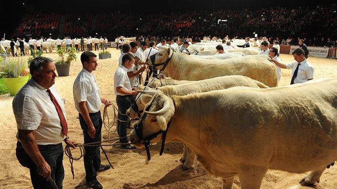 Retrouvez le live, les palmarès et les photos des concours bovins du Sommet de l'élevage sur Web-agri.