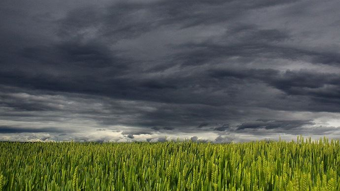 Tempête blé