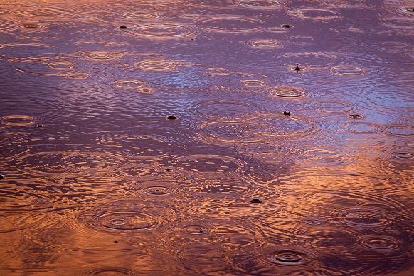 Les semis françaisgênés par la pluie
