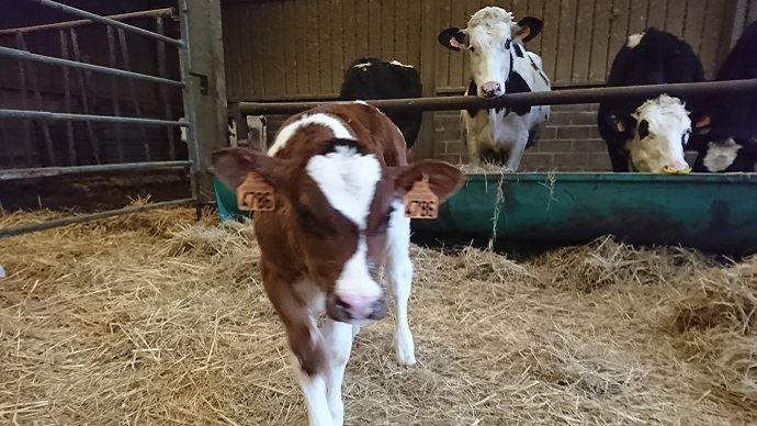 Le députés se mobilisent contre les intrusions dans les élevages