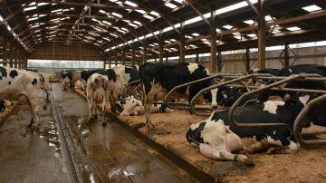 Observer le comportement du troupeau pour améliorer sa productivité