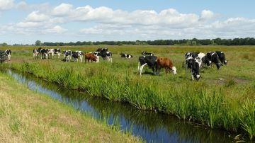 La filière laitière agit pour mieux préserver la ressource en eau