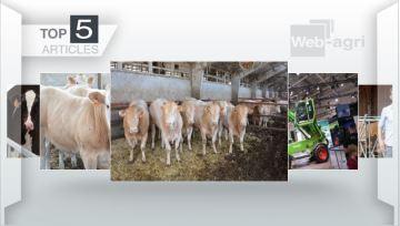 La production allaitante sur le devant de la scène cette semaine