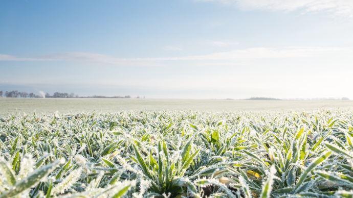 Les agriculteurs américains s'inquiètent pour les blés et maïs qui font face à une forte baisse des températures.