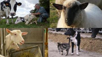 2020: l'année de la lettre R pour nommer veaux,chèvres, brebis, chiens, chats