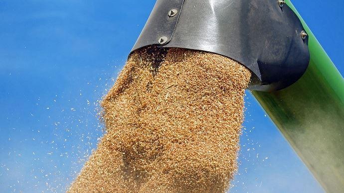 Chargement de blé