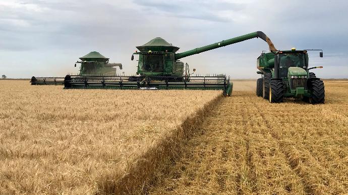 Récolte de blé en Argentine