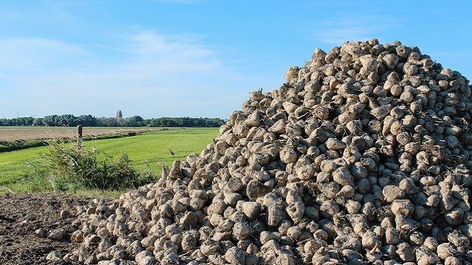 La CGB estime que les prix payés aux producteurs de betteraves devraient remonter en 2021