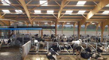 En Loire-Atlantique, le Gaec des Landelles vous fait visiter son élevage