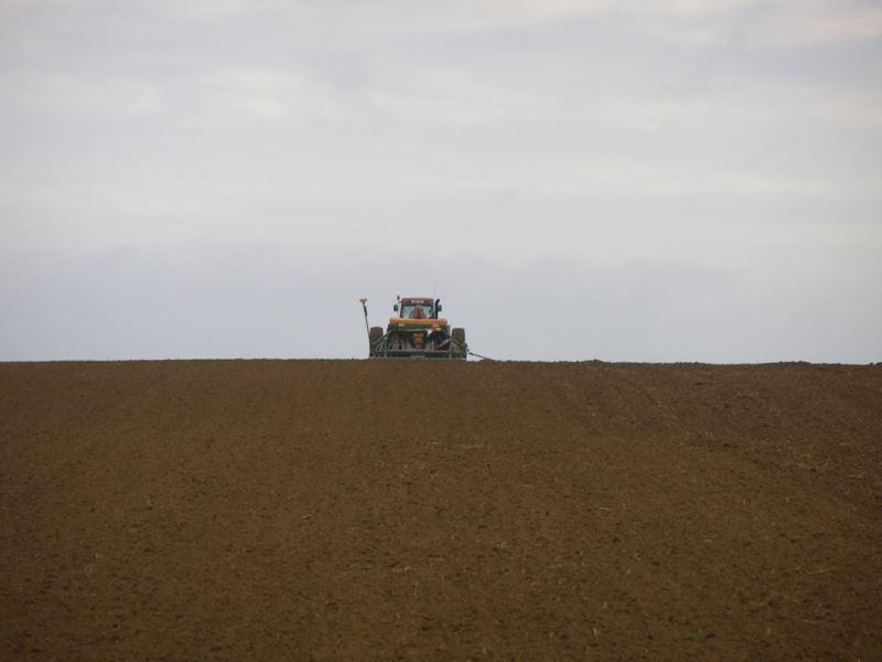 Des semis de céréales d'hiver encore non réalisés: quelles décisions prendre?