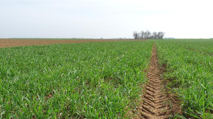 Des conditions de culture préoccupantes pour le blé
