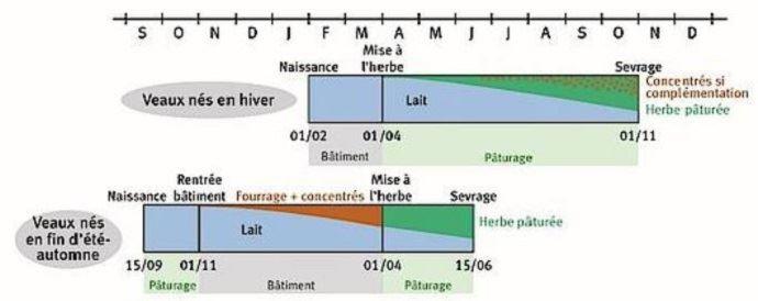 Conduites alimentaires des veaux selon la période de naissance.