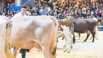 Suivez les concours bovins en live et retrouvez les palmarès et replays