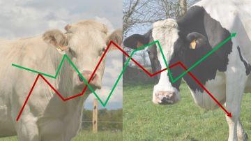 Vers un décrochage des prix du lait et de la viande?