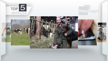 À la Une: la ferme du P'tit Gallo, les robots de traite, le logement des veaux