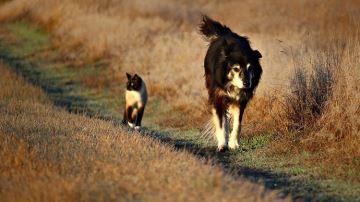 Le chien de troupeau ne serait finalement pas le meilleur allié de l'éleveur...