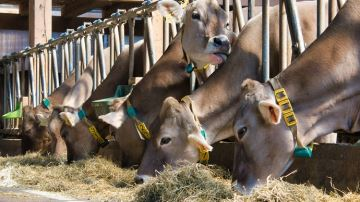 Le taux d'urée dans le lait: à quoi ça sert? Faut-il s'en inquiéter?