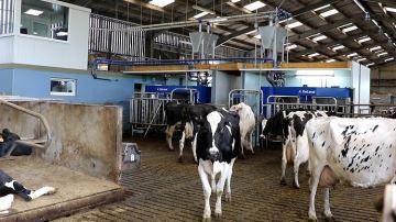 Les laiteries demandent des baisses de production
