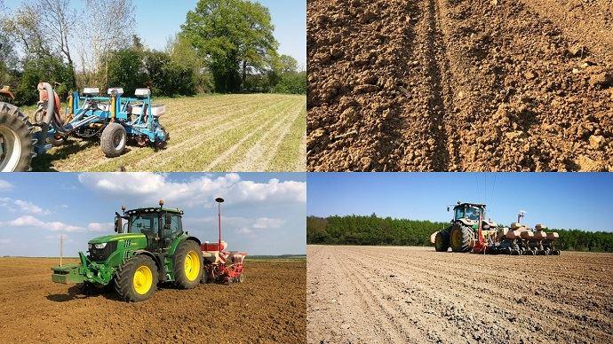Semis de maïs grain