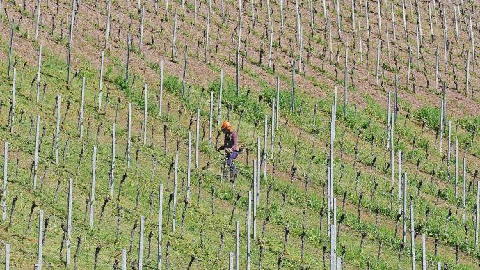 L'agriculture a besoin de saisonniers étrangers, estime le ministre de l'agriculture