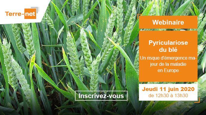 Webinaire sur la pyriculariose du blé