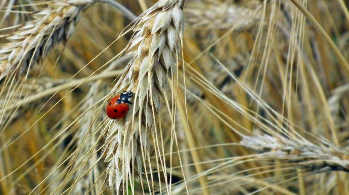 Pour la Cour des comptes européennes, la Pac ne permet pas de préserver la biodiversité des terres agricoles
