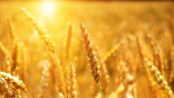 Quellemétéo pour la fin des récoltes et les semis de colza?