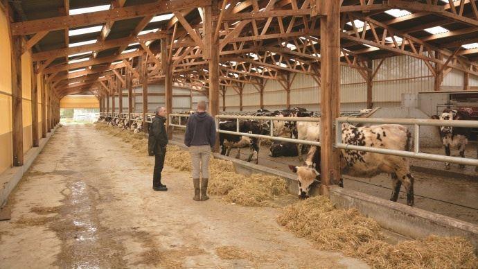 eleveurs laitiers dans la stabulation