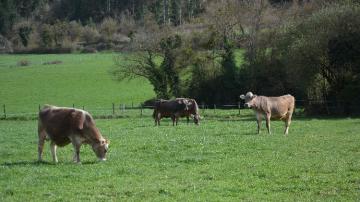L'utilisation des jachères autorisée pour les éleveurs