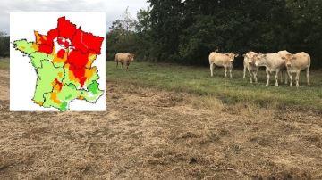 8 régions sur 12 sont en déficit de production d'herbe