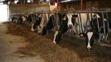 46,5% des éleveurs craignent un manque de fourrage avant les ensilages de maïs