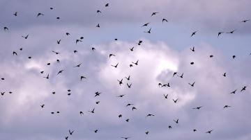 Comment limiter les nuisances des oiseaux en élevage?