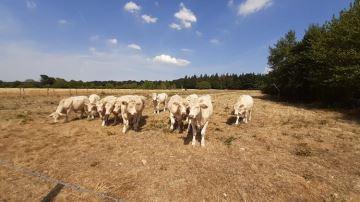 71% des régions fourragères en déficit d'herbe