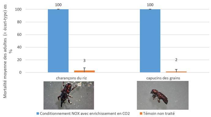 Mortalités moyennes des adultes de 2 espèces de ravageurs étudiées  selon le conditionnement du blé pendant 2 jours