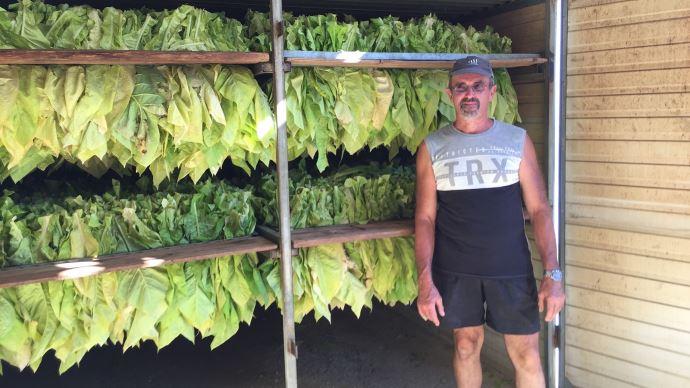 Bernard Raffaello, devant un de ses 4 séchoirs à tabac