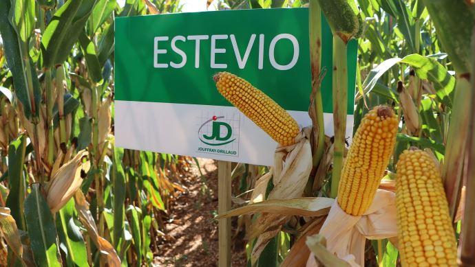 Estevio