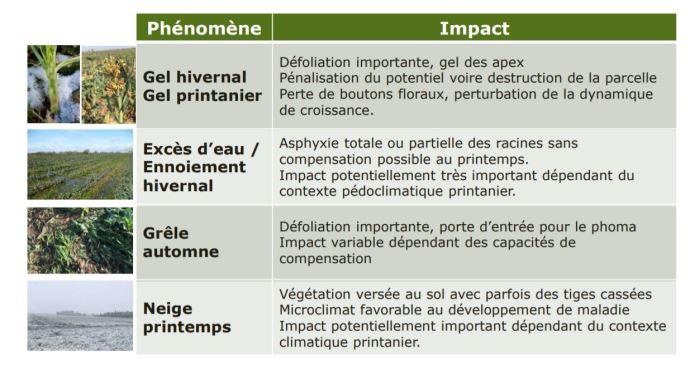 Phénomènes climatiques extrêmes et conséquences sur le colza