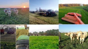 Récoltes d'herbe et pâturage au programme de cette dernière semaine de novembre