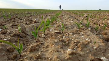Les critères importants dans le choix des variétés de maïs fourrage
