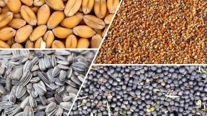 Avec le Market Live de Terre-net, questionnez et échangez avec un expert des marchés sur l'actualité des tendances de prix de vos grains.