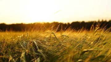 La Coordination rurale s'inquiète des baisses de production potentielles