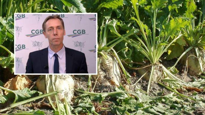 La CGB se réjouit de la dérogation concernant l'usage des néonicotinoïdes, et se projette sur les solutions alternatives