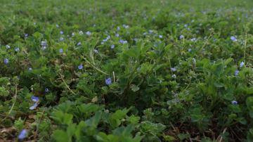 L'aide aux agroéquipements pour la culture de protéines végétales est ouverte