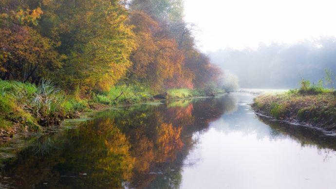 arbre rivière paysage